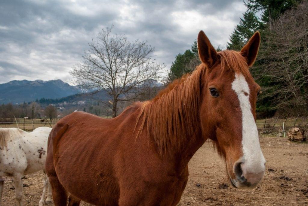 Horse Lunigiana Tuscany Agriturismo