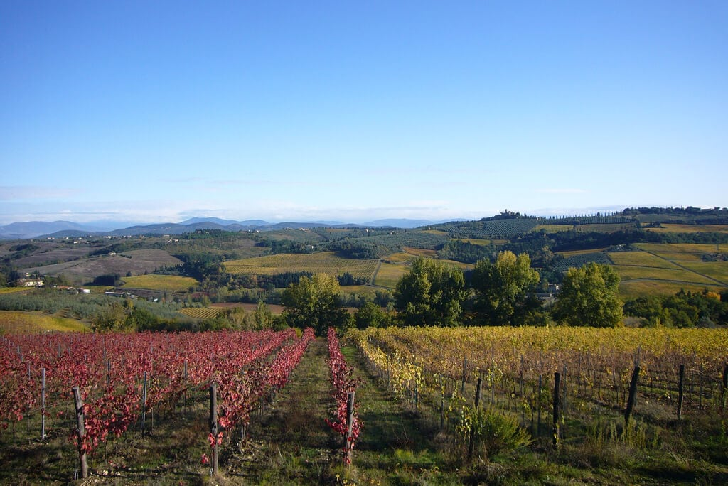 vineyards Chianti