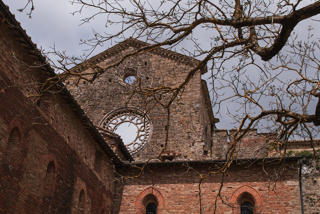 the ruins of the abbey between branches