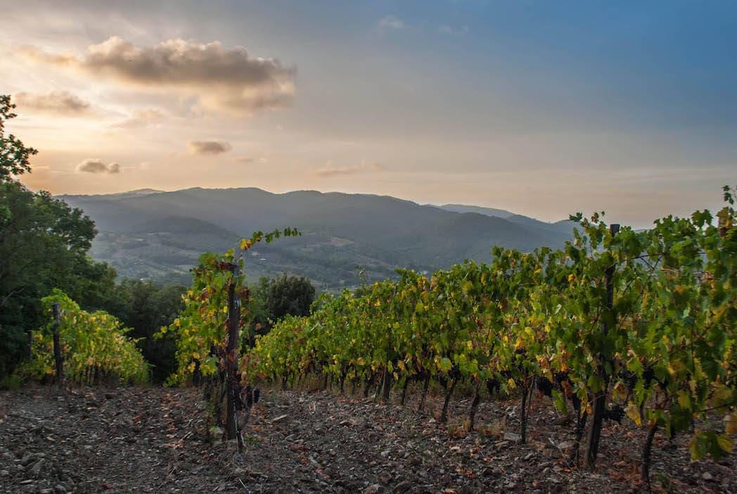 sunset Harvest Suvereto Tuscany