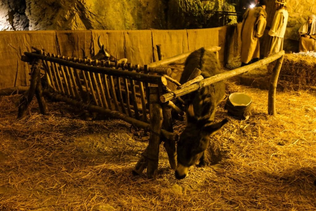 nativity scene of equi terme donkey and ox