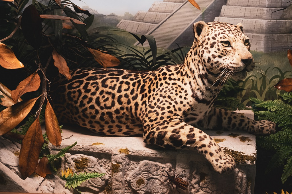 Zoological Museum Villa Baciocchi, Valdera in Tuscany